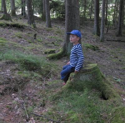 skog_02